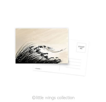 Catching wind – Postcard
