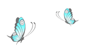 Little Wings Collection - Butterfly